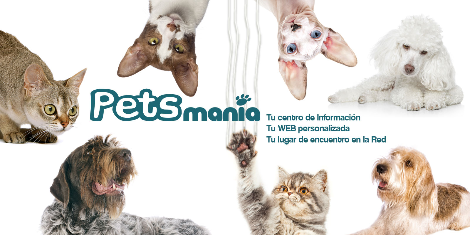 Calendario Perruno.Calendario De Eventos Sobre Mascotas Perros O Gatos