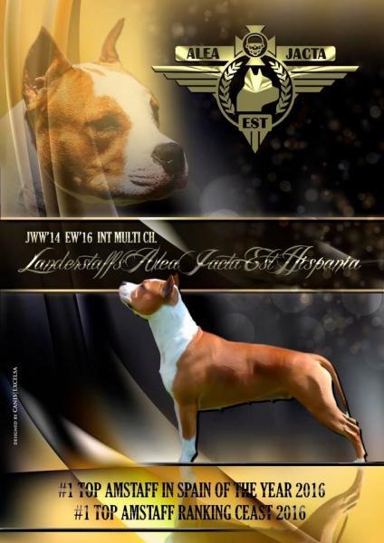 American Staffordshire Terrier. LLanderStaffs Alea Jacta Est Hispania.