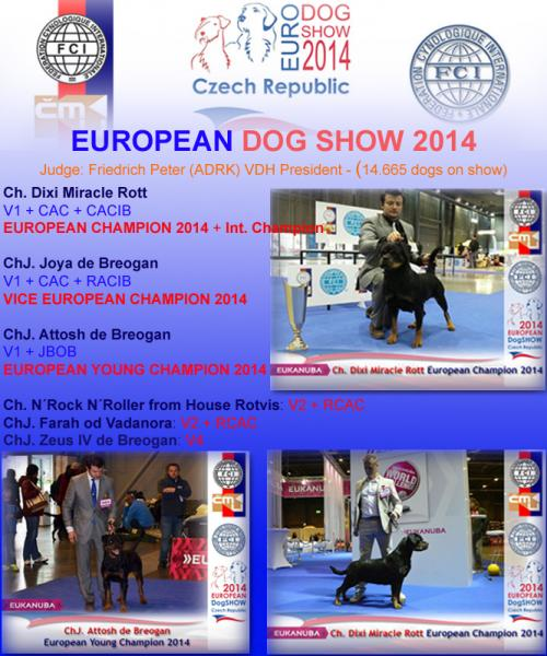 Rottweiler. European Dog Show 2014.