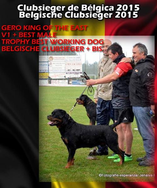 Rottweiler. CH. GERO KING OF THE EAST.