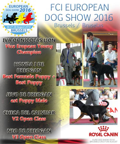 Rottweiler. GERO KING OF THE EAST. Exc. 1º CAC CACIB BOB..