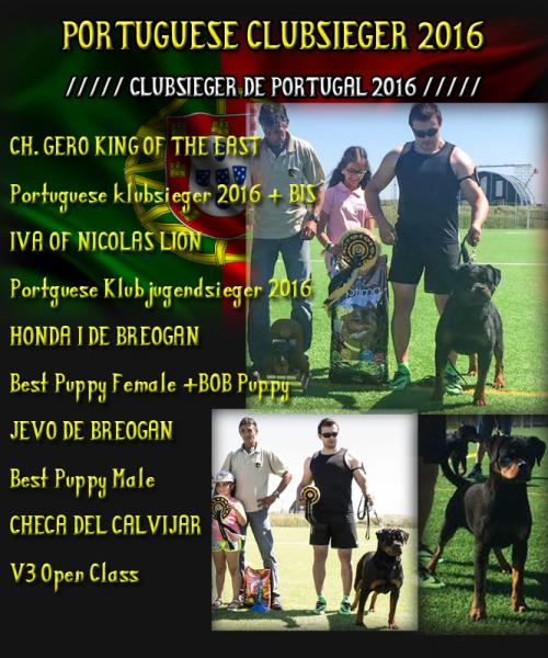 Rottweiler. CH. GERO KING OF THE EAST. PORTUGUESE CLUBSIEGER 2016   B.I.S..