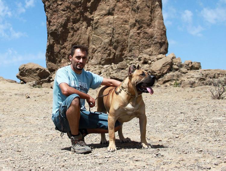 Dogo Canario. Felix Manuel Betancort.