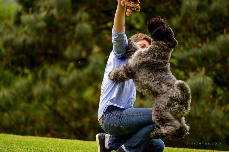 Kerry Blue Terrier.