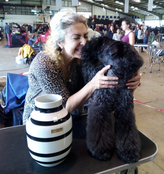 Kerry Blue Terrier. Corben Dallas de La Cadiera. R.B.O.G..