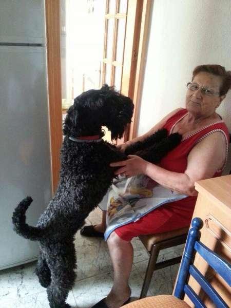 Kerry Blue Terrier. Claro de Luna de La Cadiera es Hugo.