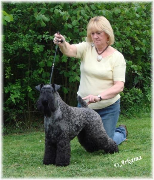 Kerry Blue Terrier.  Ch. Edbrios Bohemian Ivanhoe At Arkama.