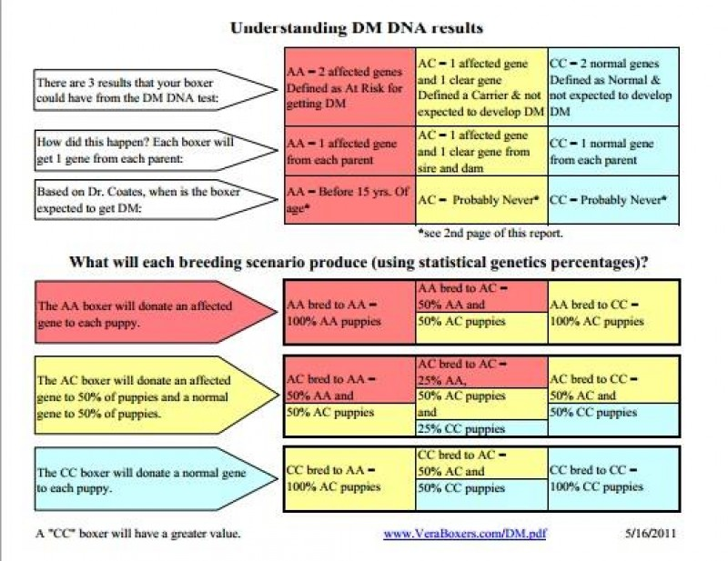 Grafico Understanding D.M