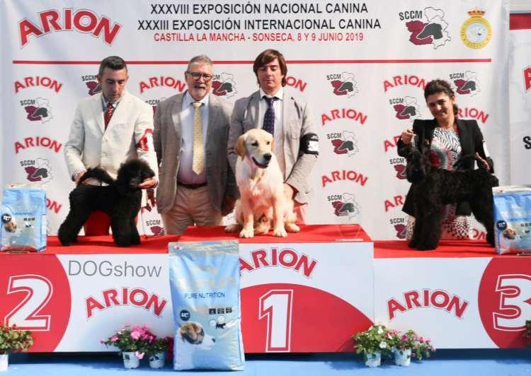Black Dominanta Grand Prix - M.B.1º - B.O.B. Puppy - B.O.G.  & R.B.I.S. !!!.