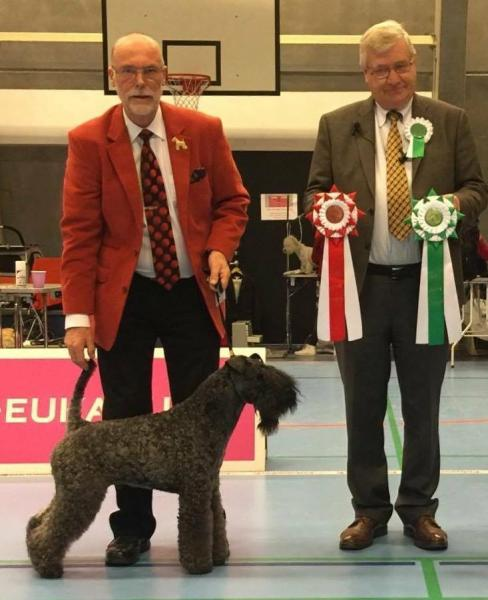 Kerry Blue Terrier.  Ch. Clanciarrai Moody Blue.