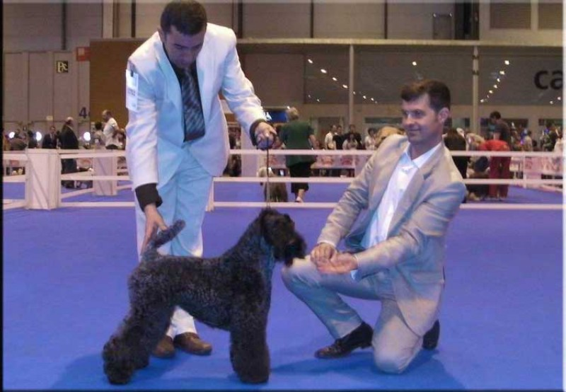 Kerry Blue Terrier. Ch. Lolita de La Cadiera at Bluemont.