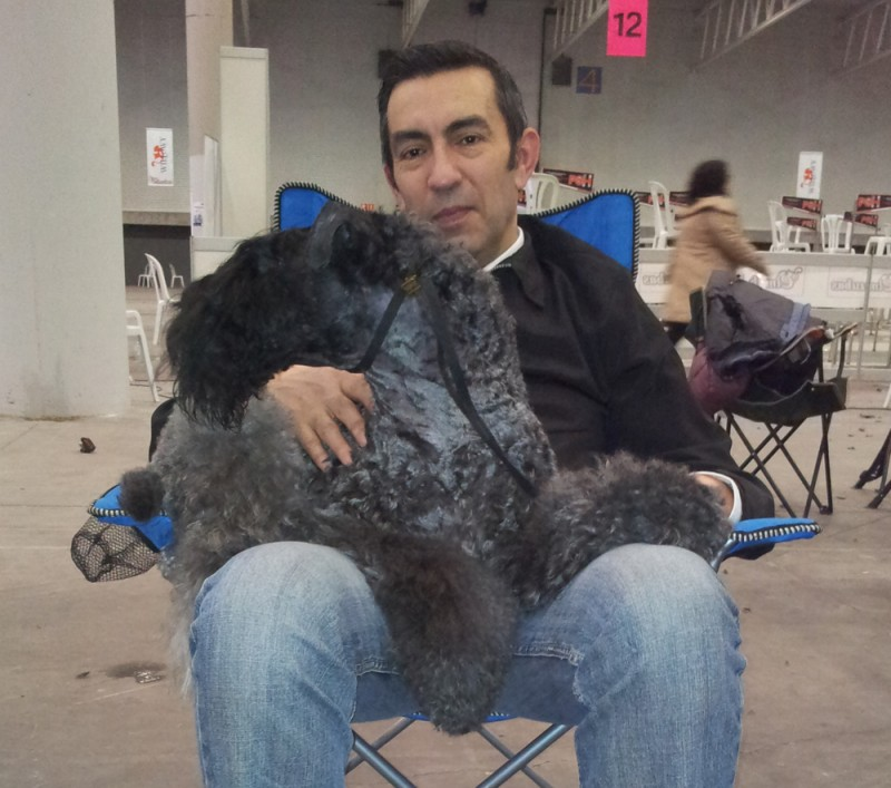 Kerry Blue Terrier. Corben Dallas de La Cadiera.