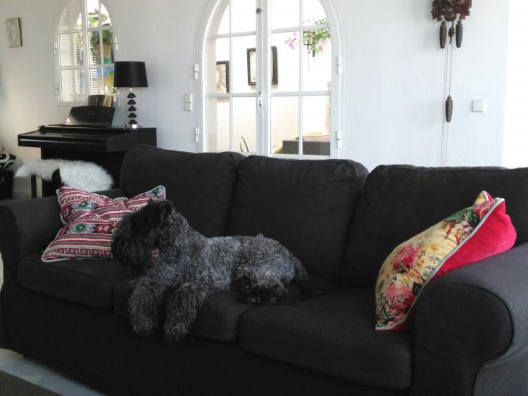 Kerry Blue Terrier. La Cadiera Gloria Bendita