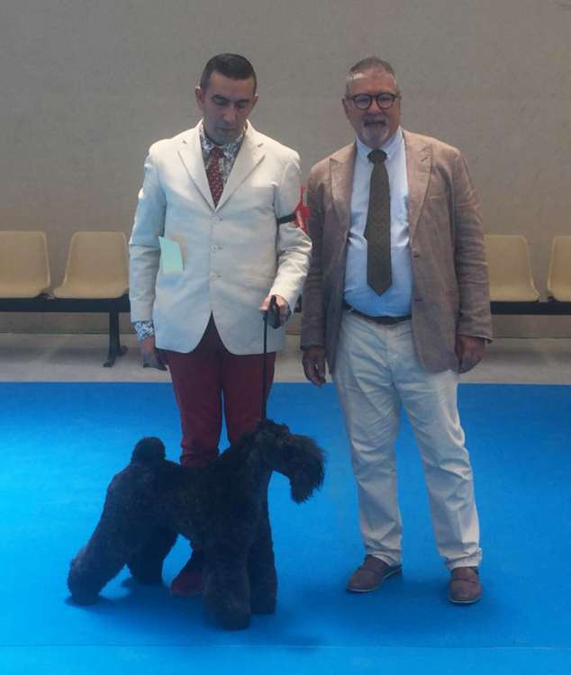 Ch. Northbound Hymn To La Cadiera. Ch. Northbound Hymn To La Cadiera. Kerry Blue Terrier. Exc. 1ª C.A.C. B.O.B..