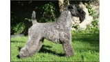 Kerry Blue Terrier. Ch. Don Mendo de La Cadiera at Saraoz.