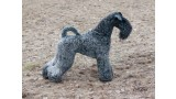 Kerry Blue Terrier. La Cadiera Fenomeno Azul.