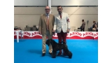 Kerry Blue Terrier. Northbound Hymn To La Cadiera. Exc. 1ª CAC CACIB BOB.