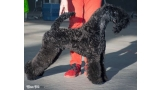 Kerry Blue Terrier. La Cadiera Made In Heaven.