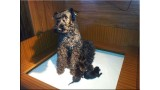 Kerry Blue Terrier. Camada 3E.