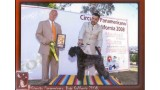 Kerry Blue Terrier. Ch. El Padrino de La Cadiera at Bluemont.