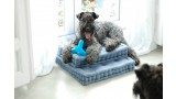 Kerry Blue Terrier. Clarita y Camilo