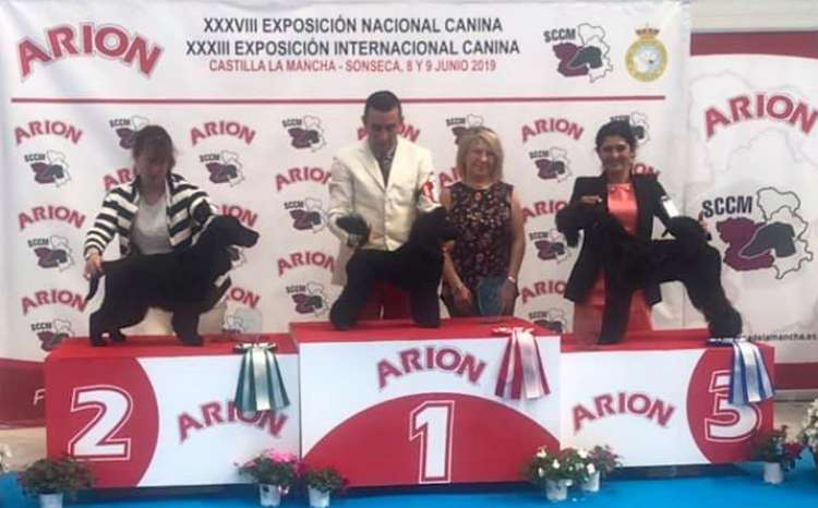En su primera salida al ring. In his first show !. Black Dominanta Grand Prix - M.B. 1º-Very Promissing Puppy - BOB Puppy - Best of Group and Best In Show Puppy !!!.