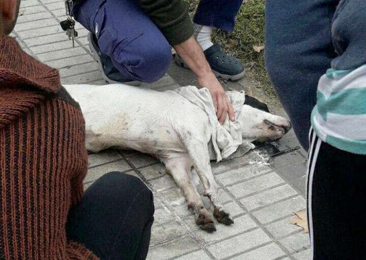 Denuncian intoxicación de Perro en Plaza Francia