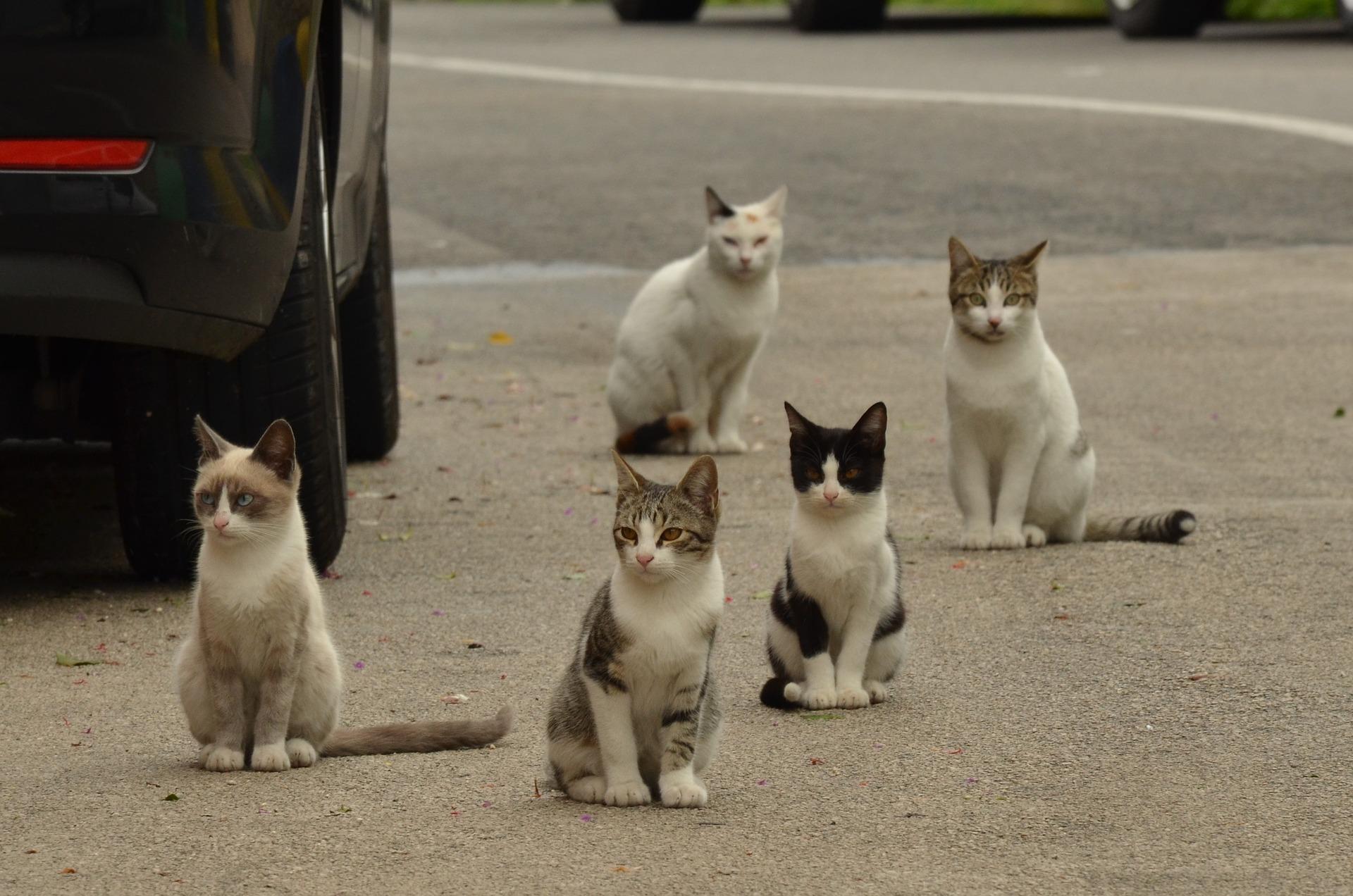 Resultado de imagen de gatos callejeros andalucia