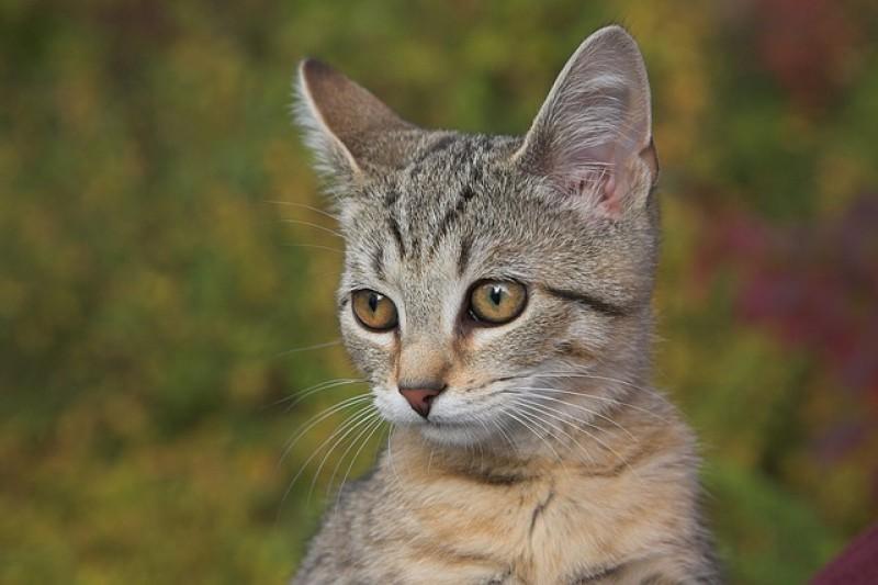 Un equipo de expertos investiga sobre la alergia a los gatos.