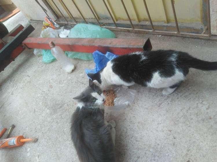 Dos gatos callejeros le dejan zapatos en forma de agradecimiento.