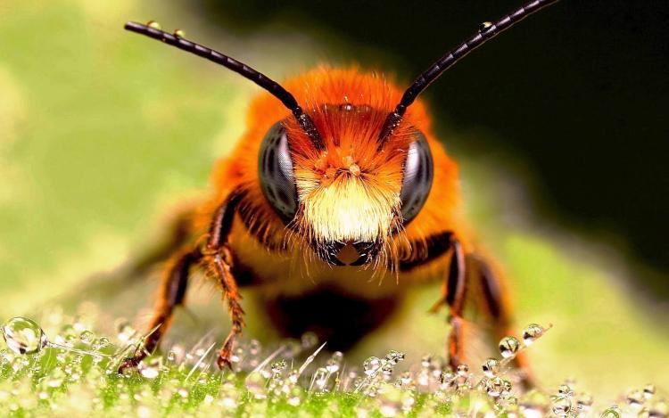 Un enjambre de abejas asesinas siembran el terror en un barrio de California.
