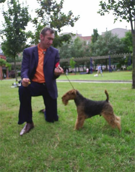 Welsh Terrier.  Ch. Tatinejos Zeporro Passion.