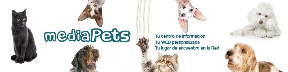 PETSmania ES - MediaPETS  Video  Catching a Feral Cat